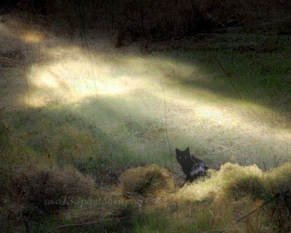 Black Cat Photography, Animal Picture, Nature Photo, Landscape, Black, Brown, Grey, Dark - 8x10 inch Print - Bewitched