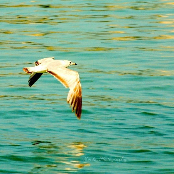 "CLEARANCE Beach Photography, Coastal Wall Art, Summer, Nautical, Seagull, Bird Photography, Seashore  5x5 inch print - ""thoughts in the wind"