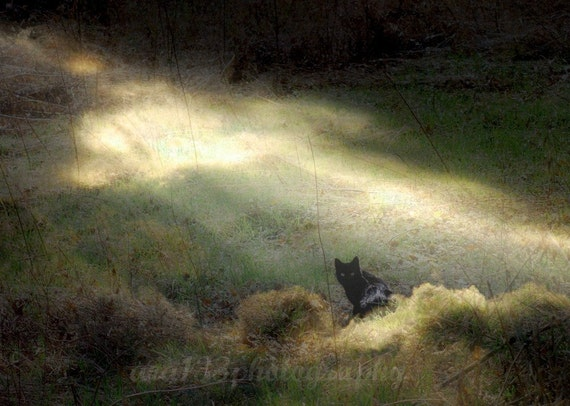 Cat Fantasy Photography Animal Print Pet Nature Picture Surreal Photo Black Cat Cat Photography Cat 5x7 inch Print  Bewitched