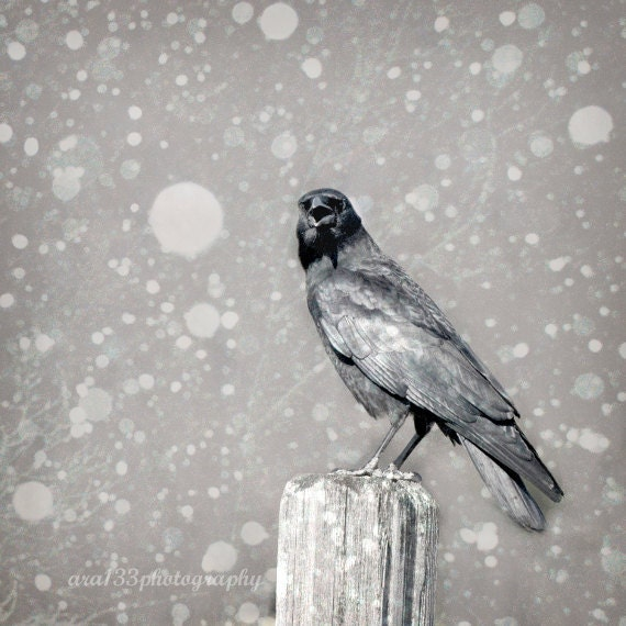 Crow Photograph, Winter,  Nature Photography, Black and White, Raven in Snow - 5x5 inch Gothic Photograph -Stately Raven of Yore