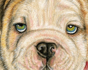 English Bulldog Puppy Art Print 8 x 10 inches