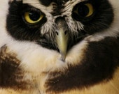 Spectacled Owl -- Photo Greeting Card