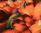 Pumpkins for Sale - Photo Greeting Card