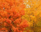 Fall Splendor - Photo Greeting Card