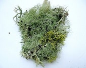 Moss Lichen Terrarium Natural Authentic Forest
