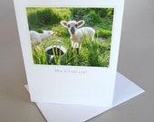 Greeting Card Lamb Country Life Green Spring Little Princess