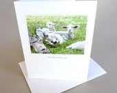 Spring Greeting Card Baby Lamb Country Life