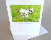 Greeting Card Baby Lamb Barnyard Animals Original Photo