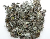 Moss Lichen Natural Authentic Forest Sage Green No.1