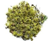 Terrarium Lichen Moss Supplies Organic Authentic Forest Chartreuse No.2