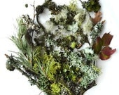 Lichen Moss Terrarium Supplies Twigs Forest Collection No.2  Photography