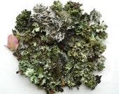 Lichen Moss Terrarium Supplies Twigs Forest Collection No.3