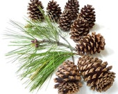 Pine Cones Arrangement Organic Eco Country Chic