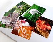Note Card Lamb Chickens Country Life Barnyard