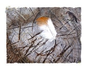 Art Photography Collage Home Decor Chopping Blog Feather Bird Finch