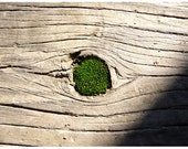 Fine Art Photography Moss Wood Nature