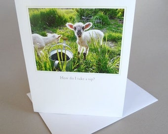 Greeting Card Lamb Country Life Green Spring Little Princess