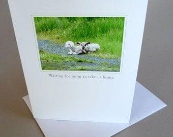 Spring Greeting Card Lamb Country Life Little Princess And Lady Gaga