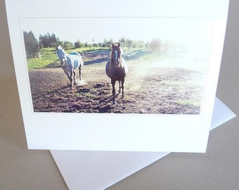 Equine Greeting Card Sunset Original Photography