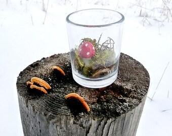 Terrarium Moss Mushroom Miniature Teeny Tiny