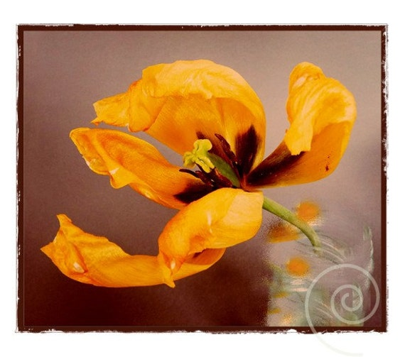 Photography Tulip Botanical Print Shabby Chic Country Life