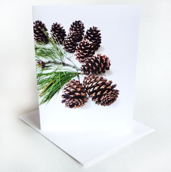 Pine Cones Holidays Card  Branches Forest Collection