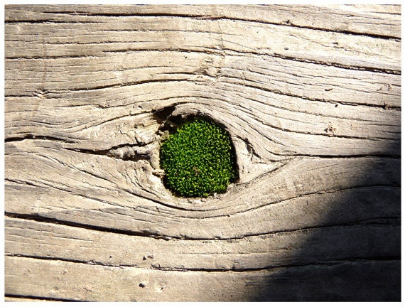 Fine Art Photography Moss Wood Nature
