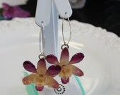 real dendrobium minature orchid dangle earrings