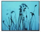 moss photogram 10x8