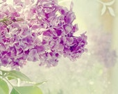 Lilac  Photograph, Purple Still Life, Soft Focus Shabby Chic Wall Decor, Floral Art Print, Lace