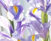 Purple Iris Greeting Card,Mother's Day Card,, Iris Still Life Photograph