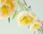 Yellow Tulip Art,  Tulip Photo,  Floral Art Print, Rustic Farmhouse Decor, French Country Home, Yellow Wall Art