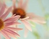 Pink Daisy Print, Shabby Chic Wall Decor, Flower Photo, Nature Photography, Nursery Decor, Bedroom Decor
