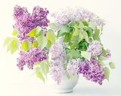 Lilac  Photograph, a  Floral Art Print, Purple Bouquet Still Life, Spring Flower Photography, French Country - JudyStalus