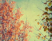 Fall Foliage Photograph,  Sky Landscape, Autumn Photography,  New England, Red Turquoise Wall Decor, Rustic Decor
