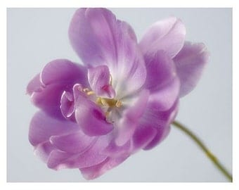 Purple Tulip Photo Card, a Fine Art Blank Card, Tulip Photograph, Flower Greeting Card