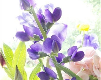 Purple Flower Card,  a  Fine Art Photograph Blank Card, Blue Baptisia