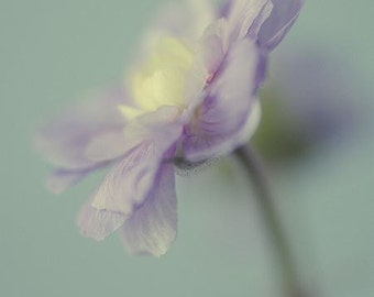 Blue Flower Photograph, Fine Art Print,  Still Life Photography, Shabby Chic Wall Decor