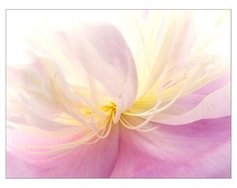 Pink Peony Card, Peony Photograph, Mother's Day Card, Blank Greeting Card