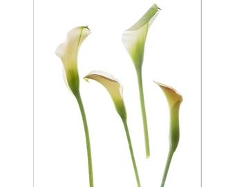 Calla Lily Card, Flower Greeting Card