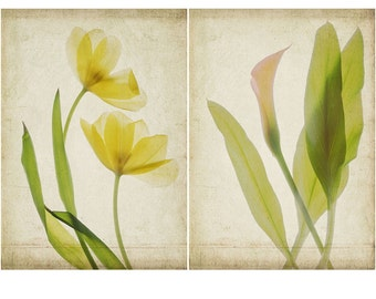 Botanical Print Set, Scanned Flowers,  Calla Lily and Tulips, Shabby Chic Home