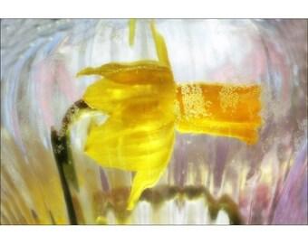 Daffodil Photo,  Fine Art Print, Yellow Wall Art, Flower Photography, Nursery Decor, Flower Art