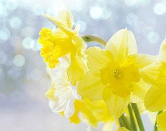 Daffodil Art, Still Life Photography, Floral Art Print, Yellow Wall Decor, Nursery Art