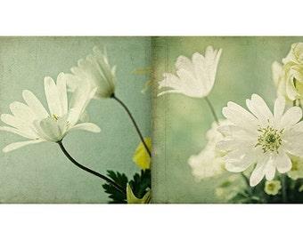 Flower Photo Set, White Anemone,   Floral Art Print Set, Mint, Nursery Art, Cottage Chic Decor