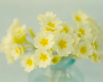 Flower Still Life Photo, Floral Art Print, Yellow Primrose Photograph, Shabby Chic Wall Decor