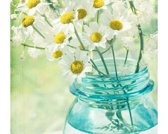 White Daisy Photo,  Still Life Photography, Turquoise Wall Decor, Country Chic Decor, Flower Photography, Daisy Print, Daisy Art