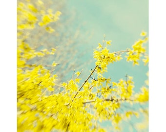 Yellow Flower  Photograph, Soft Focus Floral Wall Decor Shabby Chic, Forsythia Photo, Nature Photography