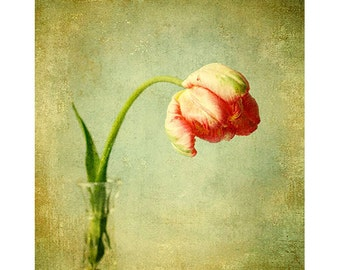 Botanical Print,  Red Tulip Still Life Photograph, Tulip Print,  French Country Decor, Flower Photography