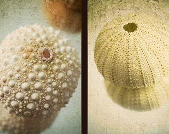 Two Sea Urchin Print Set,  Nautical Decor, Beach Decor, Sea Shells Wall Art, Rustic Decor, Still Life Photography