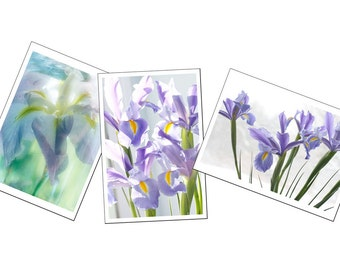 Three Iris Photo Cards,  Blank Cards, Iris Flower Photography,  Floral Greeting Card Set